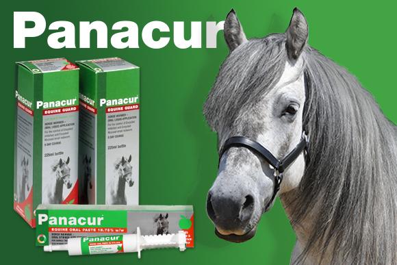 Panacur Equine