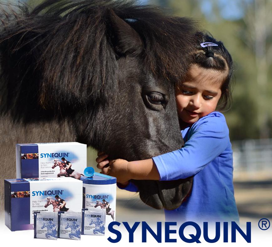 Synequin Equine