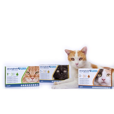 Stronghold Plus  Small Cat 15mg spot-on solution for cats