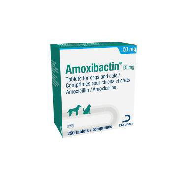 Amoxibactin 50mg Tablets For Dogs