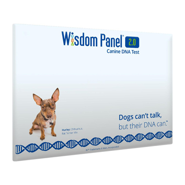 Wisdom Panel Dog DNA Testing Kit