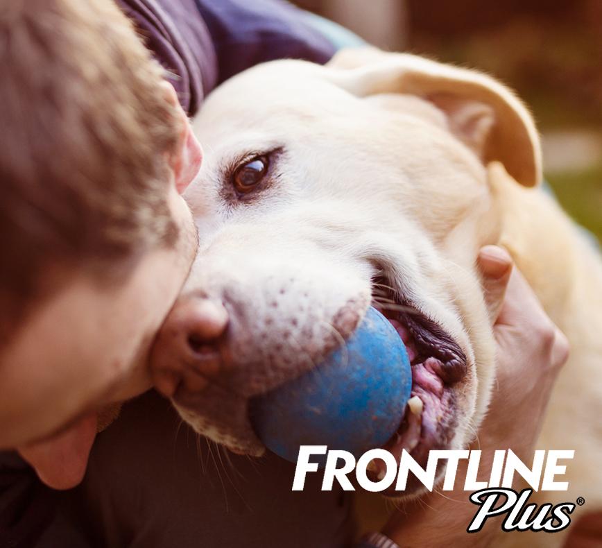 Best Prices On Dog Medicines