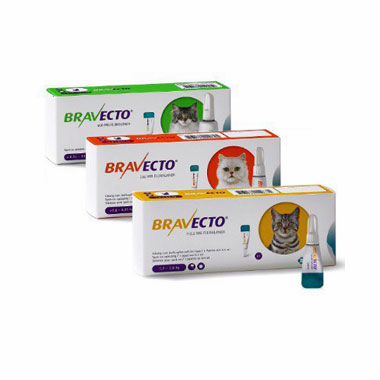 Bravecto 112.5 Mg Spot-On Solution For Small Cats (1.2 – 2.8 Kg)