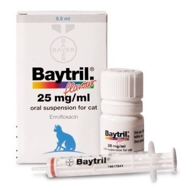Baytril Flavour Oral Suspension for Cats