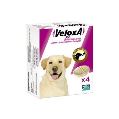 Veloxa XL Chewable Dog Wormer